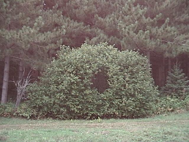 Portal Bush